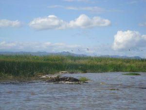Ethiopia, Crocodile, Lake Chamo, Arba Minch, EastAfricaTourOperator.net
