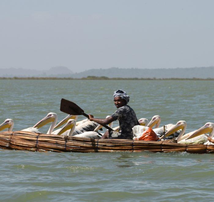 Ethiopia Papyrus Boat and Pelicans (Tana Lake, EastAfricaTourOperator.net