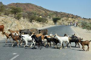 Ethiopia, On the road to Konso Village, EastAfricaTourOperator.net