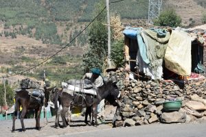Ethiopia, Donkeys as means of transportation, EastAfricaTourOperator.net
